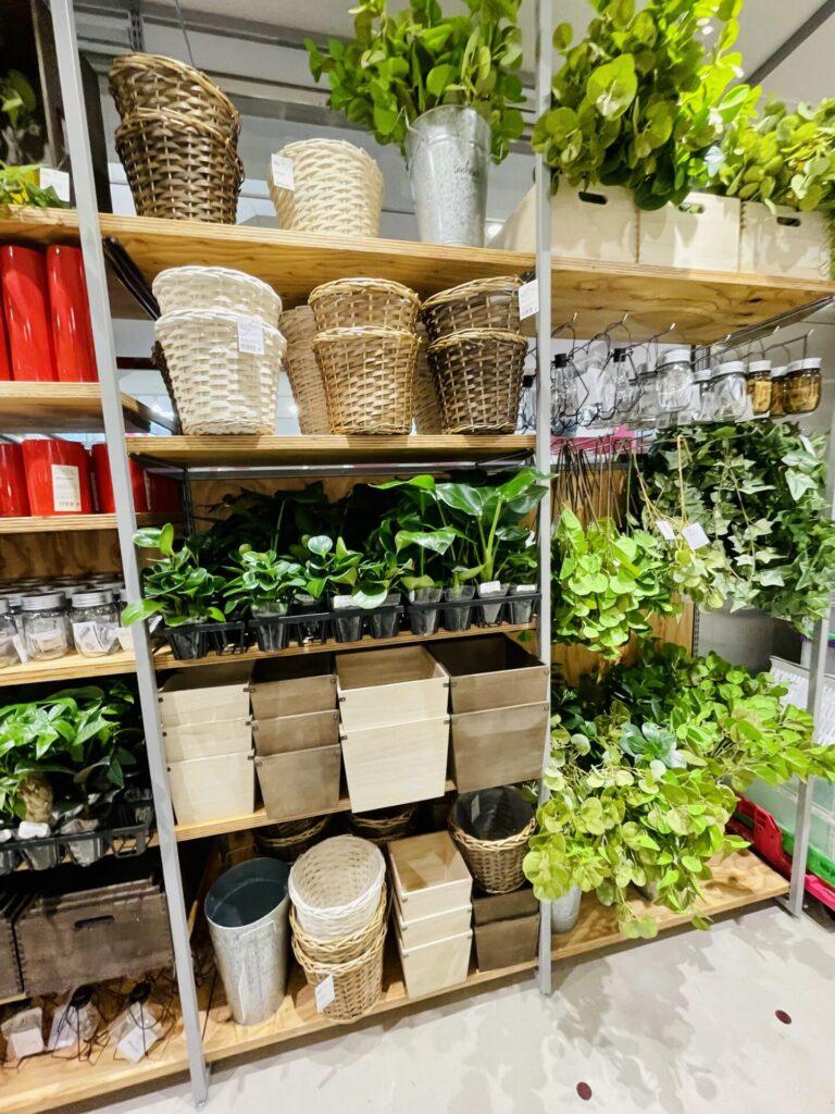 【購入レポ】ダイソー発の新ブランド「Standard Products by DAISO」に行ってきました♪観葉植物